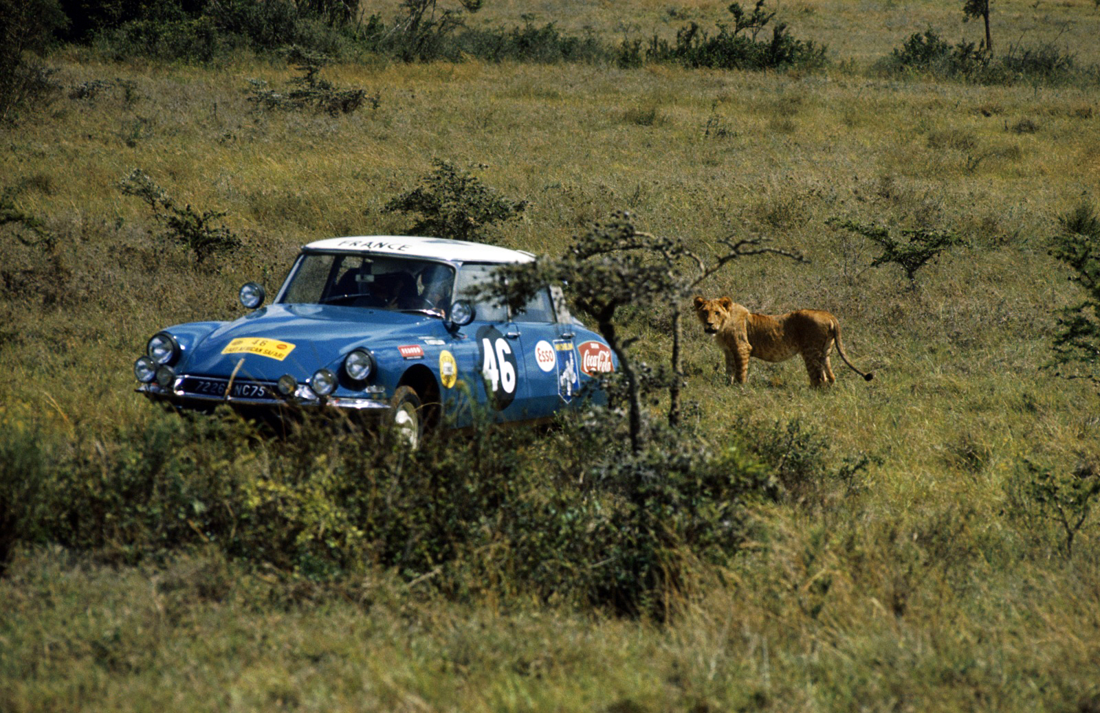 Citroën DS n°30 Safari rally 1965